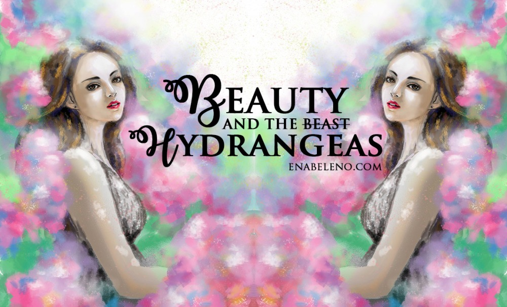 beauty-in-hydraengeas2