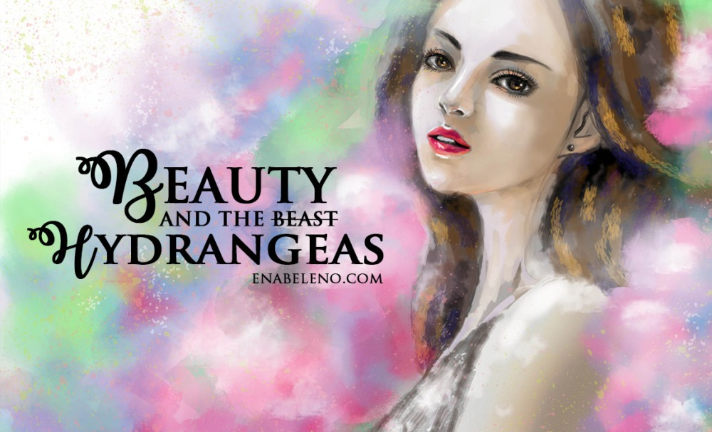 beauty-in-hydraengeas5