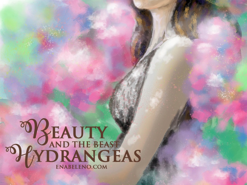 beauty-in-hydraengeas6